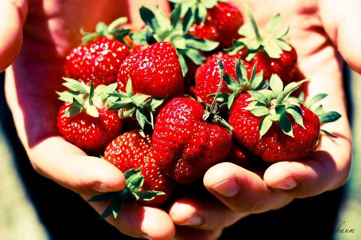 Strawberry Season at QuinnFarm
