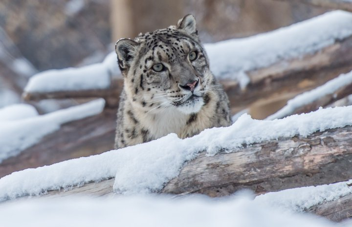 Winter at the Zoo in Quebec