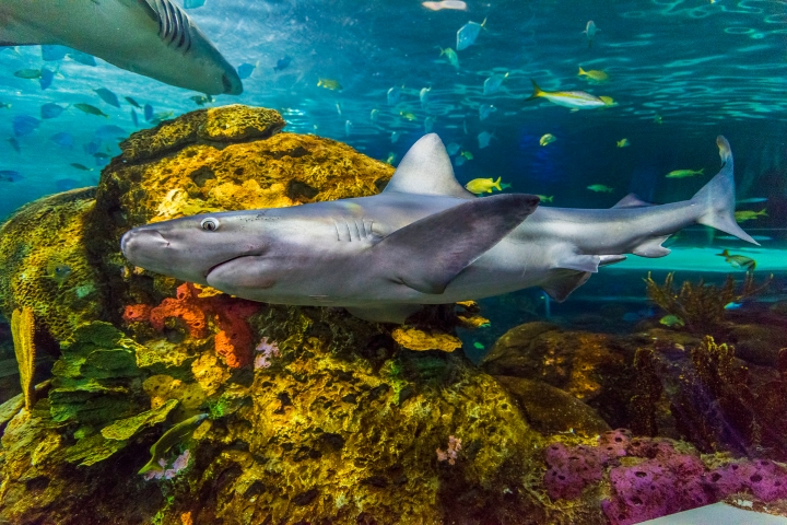 RipleysAquarium_shark3.jpg