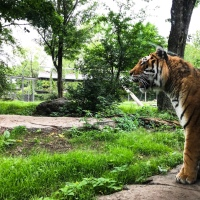 Everything you need to know before you go to the Granby Zoo
