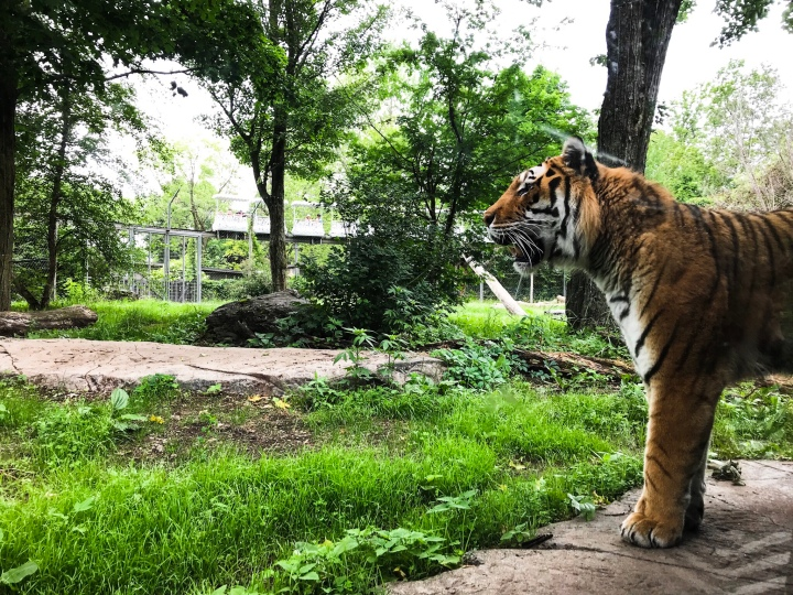 Everything you need to know before you go to the GranbyZoo