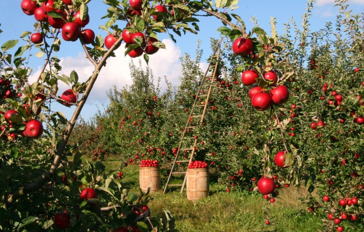 Top Free Places to Go Apple Picking NearMontreal