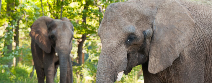 A New Elephant at the Granby Zoo